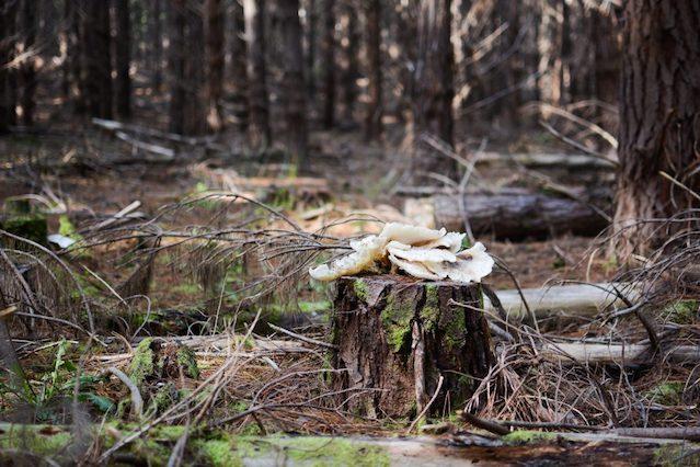Ghost Mushroom Lane