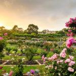 centennial park roses