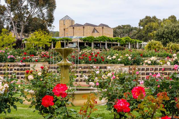 centennial park roses 2