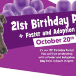 greyhound adoption program birthday