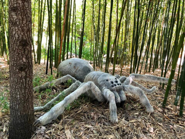 Gigantic Spider at Adelaide Zoo