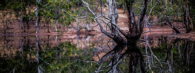 para wirra conservation park
