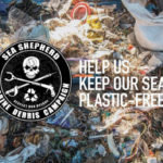adelaide beach clean sea shepherd