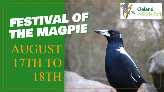 festival of the magpie
