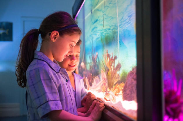 marine discovery centre open day
