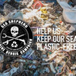 sea shepherd beach clean
