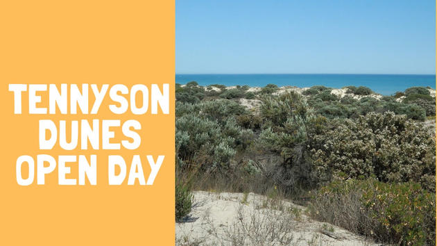 tennyson dunes open day