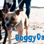 doggy day at the beach