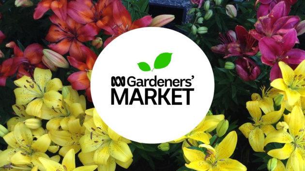 abc gardeners market
