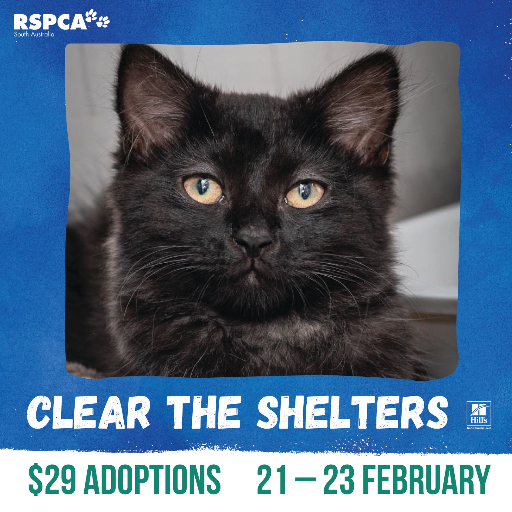 Rspca Clear The Shelters South Australia 21 23 Feb 2020 What S On For Adelaide Families Kidswhat S On For Adelaide Families Kids