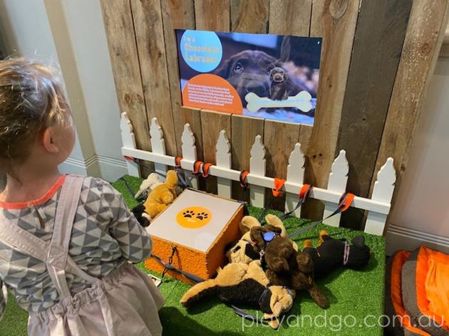 South Australian Museum Dogs Exhibition