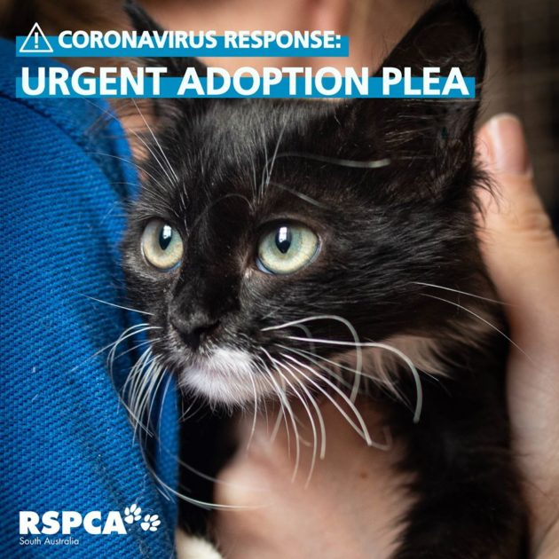 Rspca Urgent Adoption Plea March 2020 What S On For Adelaide Families Kidswhat S On For Adelaide Families Kids