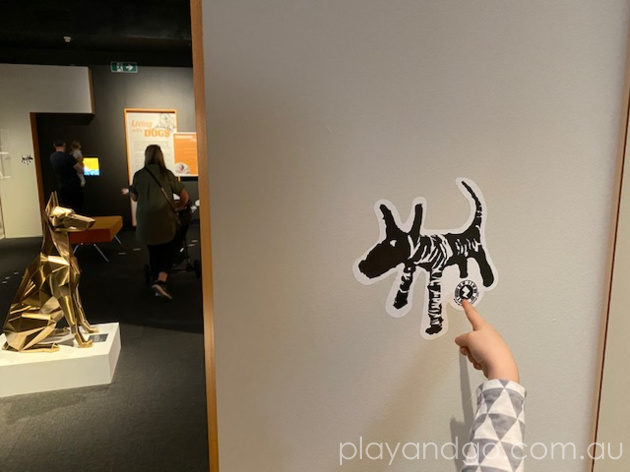 South Australian Museum Dogs Exhibition Review