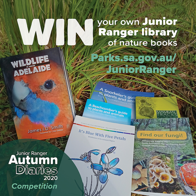 Junior Rangers Competition