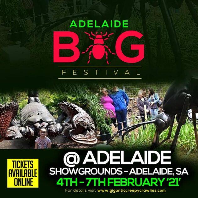 adelaide bug festival