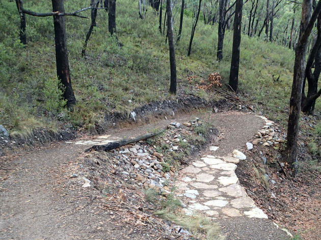 steub trail