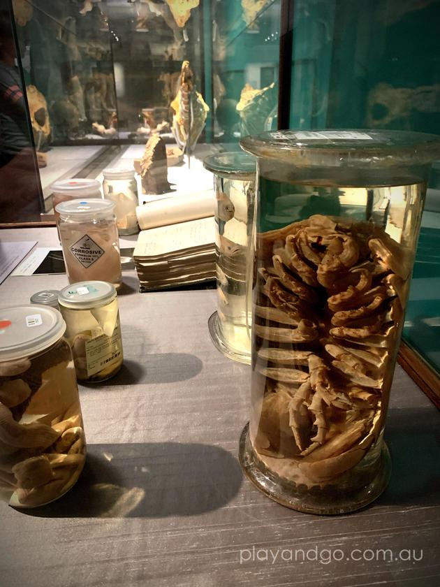 Wonders Exhibition SA Museum