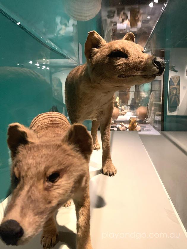 Wonders SA Museum