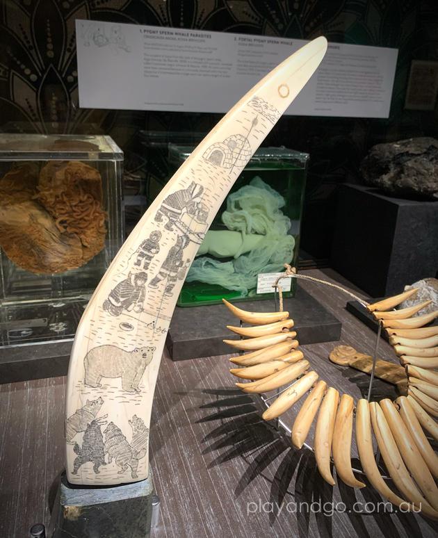 Wonders Exhibit SA Museum