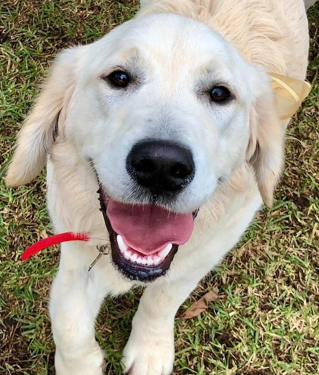 Dog Registration