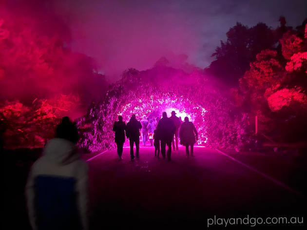 Light Cycles Illuminate Adelaide