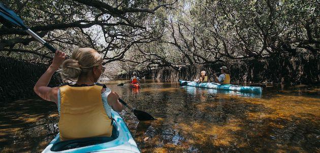 Dolphin Sanctuary Kayak Tour