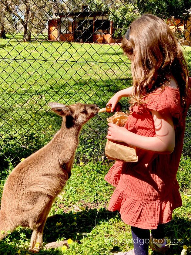 Woodstock Wines Wildlife Sanctuary